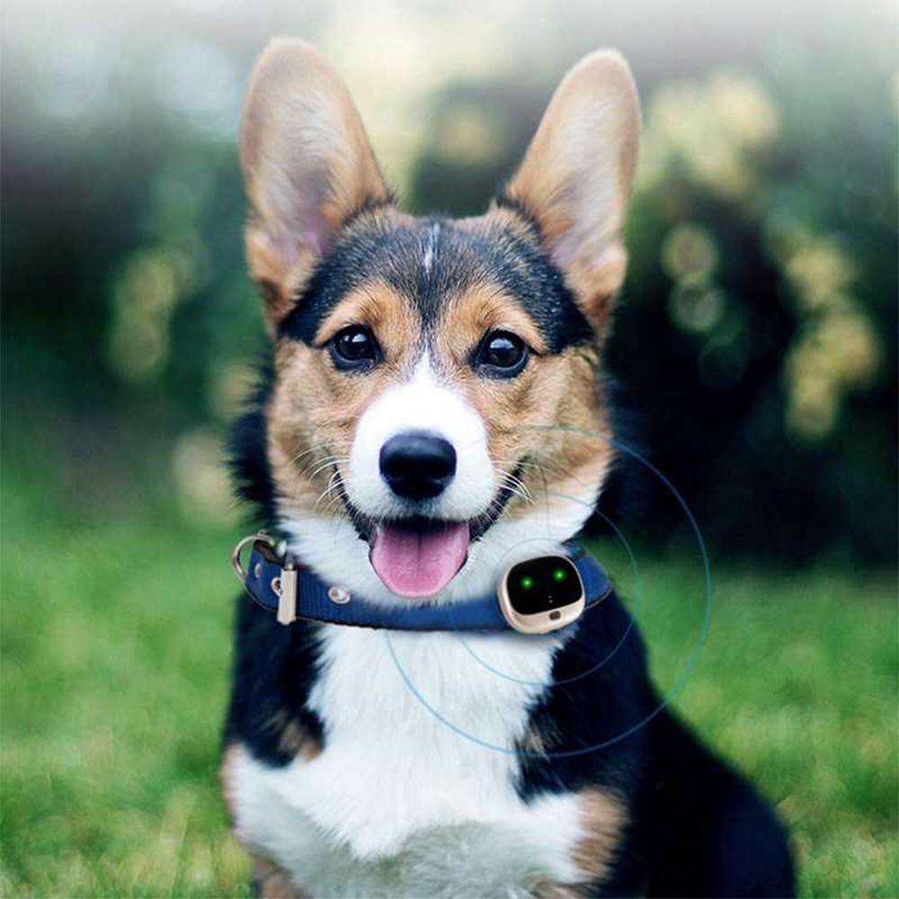 GPS Pet Tracking Device Pet Collar Navigation System_3